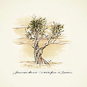 Thumbnail for the Jamestown Revival - A Field Guide to Loneliness link, provided by host site