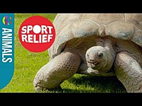 Thumbnail for the Tortoise - Attempts 100 Metre Sprint! link, provided by host site
