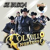 Thumbnail for the Colmillo Norteno - Se Busca link, provided by host site