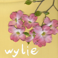 Thumbnail for the Wylie - Tape #1 link, provided by host site