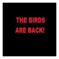 Thumbnail for the Danny J - The Birds Are Back! link, provided by host site