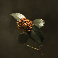 Thumbnail for the St. Paul & The Broken Bones - Young Sick Camellia (Japan Version) link, provided by host site